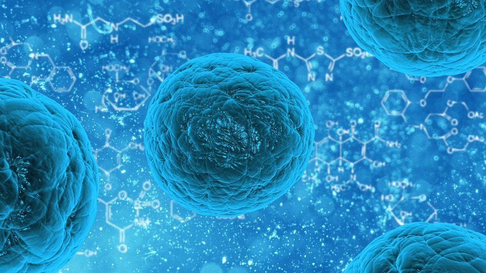 Celule Stem X Cell