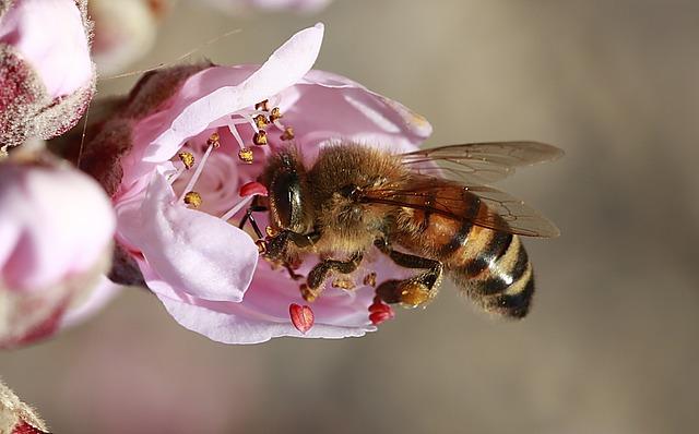 Oamenii de stiinta lucreaza la crearea unui pesticid prietenos cu albinele
