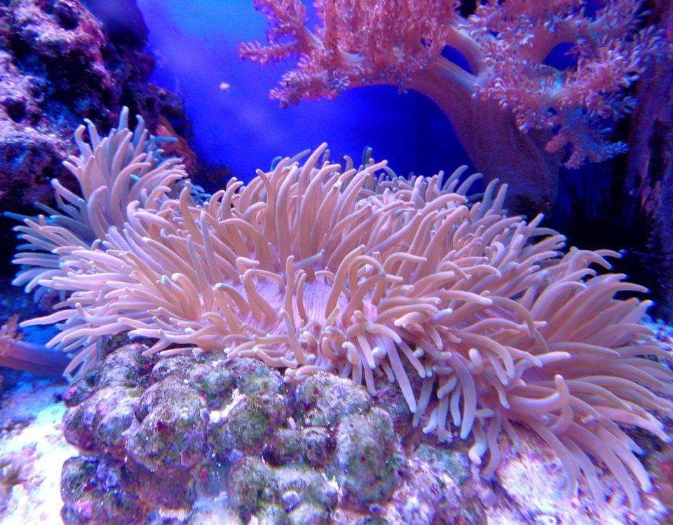 Orasul de corali