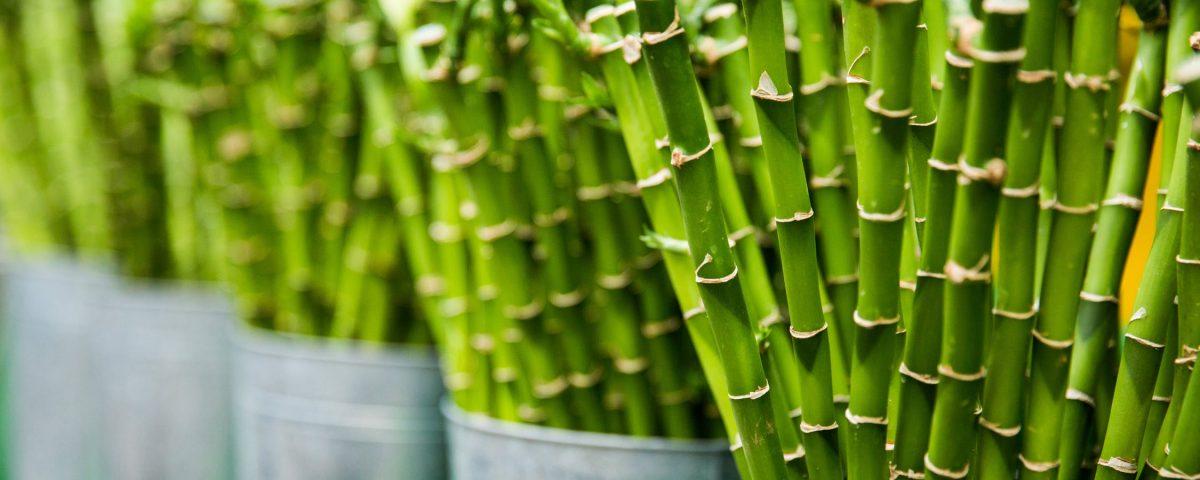 Bambusul, o idee pentru podea